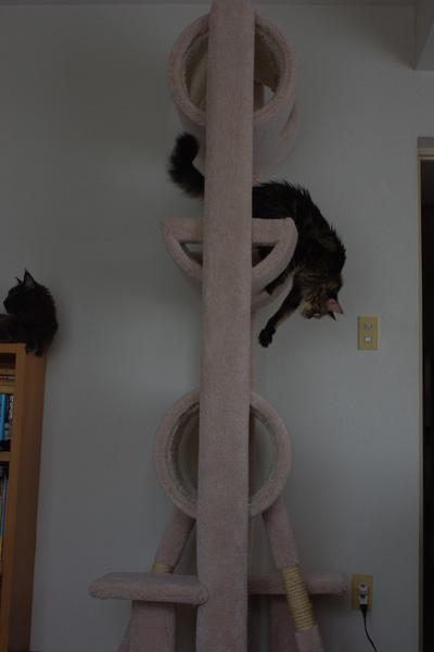 Cat_tower